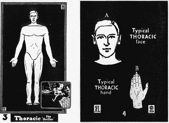 02-thoracic.png